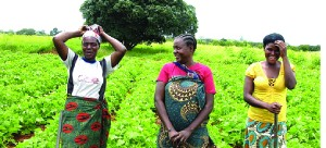 •FOR women agriculture can stand as a stepping stone to capital creation for other entrepreneurship support.