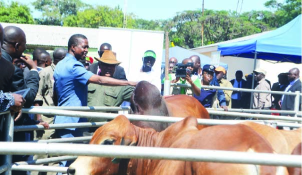 • PRESIDENT Edgar Lungu (in short-sleeve blue suit), with Agriculture Minister Given Lubinda (in hat), admires cattle at the Livestock section of the Copperbelt, Mining, Agriculture and Commercial Show in Kitwe yesterday. Picture by MOFFAT CHAZINGWA (see story on page 2)