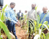 •PRESIDENT Edgar Lungu inspects a maize field in Petauke yesterday, where the crop has withered due to poor rains. The President was accompanied by Eastern Province Minister Malozo Sichone (centre) and Youth and Sports Minister Vincent Mwale (right). Picture By SHABBY MULOPWE/ZANIS