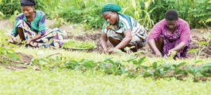 • when women are empowered and are able to claim their rights and access to land, leadership, opportunities and choices, the economies grow.